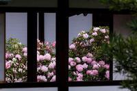 石楠花咲く隨心院 - 花景色-K.W.C. PhotoBlog
