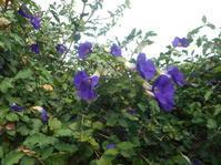 クーラーのお世話に!目立たない花を。 - 沖縄山城紅茶 茶摘み日記