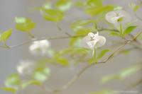 花と水鳥・・・ - ショーオヤジのひとり言
