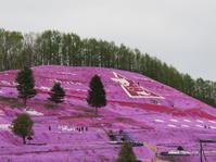 東藻琴の芝桜 - 湿原と海のそばで