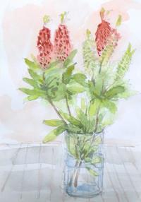 ブラシノキの赤い花 - ryuuの手習い