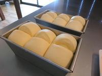 6月の予約状況。 - 奈良県パン教室『ぱんといろいろ…。』