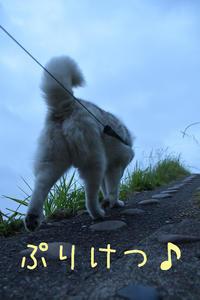 ジロちゃんと遊ぼう~♪ - 犬連れへんろ*二人と一匹のはなし*