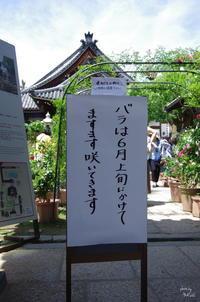 橿原市小房町 おふさ観音寺のバラ - ぶらり記録(写真) 奈良・大阪・・・