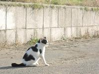 子猫の写真募集しています~ - 湘南藤沢 猫ものの店と小さなギャラリー  山猫屋