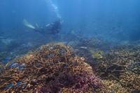 18.5.20 西に東に - 沖縄本島 島んちゅガイドの『ダイビング日誌』