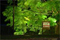 二ノ瀬駅の青もみじ新緑ライトアップ - あ お そ ら 写 真 社