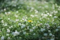春の余韻 - *Any*