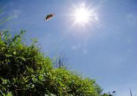台湾にも日本にも生息するタテハたち - ヒメオオの寄り道