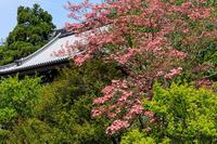 春の花咲く梅宮大社 - 花景色-K.W.C. PhotoBlog