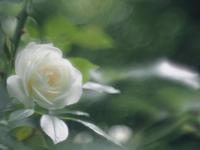 5月の赤塚植物園 3 - 光の音色を聞きながら Ⅲ