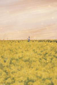 rape blossoms - EAM photo