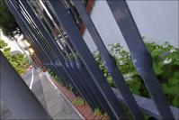 都心の校庭裏の小径に咲くドクダミの白い花が美しい! - 生きる歓び Plaisir de Vivre。人生はつらし、されど愉しく美しく