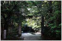 亀戸 -8 - Camellia-shige Gallery 2