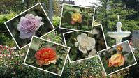 『神戸町のバラ公園いこいの広場を歩いて~』 - 自然風の自然風だより