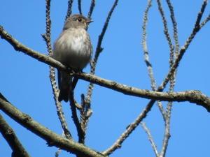 森の都愛鳥会