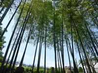 新緑あふれる5月の植物園はお勧め♪東京大仏と植物園とお蕎麦の板橋散歩 - ルソイの半バックパッカー旅