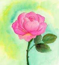 薔薇 - ぎんネコ☆はうす