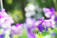 今日のふわラー #345 - ainosatoブログ02