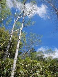 爽やかな五月晴れの薮漕ぎ登山…恵那山・黒沢(点名) - 山にでかける日