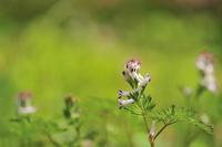 第22候 蚕起きて桑を食む - Wind Tribe Story