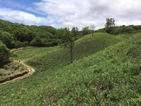 蒜山(ひるぜん)高原/ワラビ採り/岡山 - 建築事務所は日々考える
