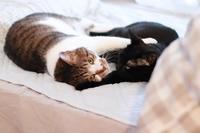 好き過ぎる猫 - きょうだい猫と仲良し暮らし