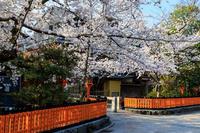 桜咲く京都2018 祇園白川・桜散歩 - 花景色-K.W.C. PhotoBlog