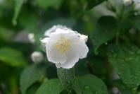 雨に咲く - やさしい時間