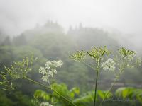 雨時々五月晴れ・・ - 鈴木寿のブログ  フライフィッシングな毎日