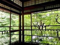 青もみじに会いたくて、京都「瑠璃光院」へ - シニョーラKAYOのイタリアンな生活