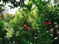 Kusaniwa Open Garden 2018ー 6月3日 ーゆる〜く開催予定 - Healing Garden  ー草庭ー