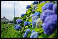 旧中川水辺公園 - とまれみよ