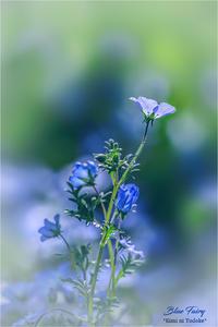 Blue Fairy VOL.01 - 君に届け