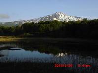 桑の木台湿原 平成30年5月20日の様子 - 花立の花情報