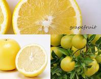 雨の季節はお日様の様にハッピーで明るい香りを・・・グレープフルーツ - tecoloてころのブログ