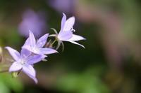 初夏に咲く星 - ecocoro日和