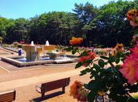 井頭公園に来てます。バラが満開です@真岡 - 設計事務所 arkilab