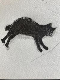 一日一絵  猫が朝 伸びをするとその日は何かいいことがある - ~メインクーンと一緒~デナちな日々
