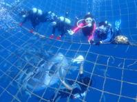 5月21日ジンベエ&青の洞窟体験ダイビング - 沖縄・恩納村のダイビング・青の洞窟体験ダイビング・スノーケルご紹介