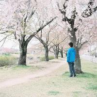 河原の桜-5- - ayumilife with kate