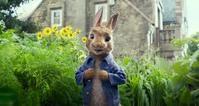 日々雑感5/22ウサギと人間のバトルロワイヤルな「ピーターラビット」と恐ろしいウサギの映画。 - Suzuki-Riの道楽