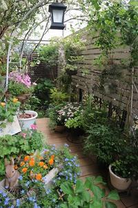 5月の庭から - 毎日がばら色