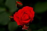 *薔薇園ラスト!* - 静かな時間