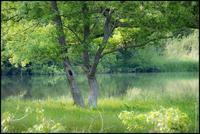 白石川物語・・・みどりの香り - 花のこみち