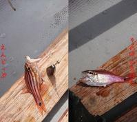雑魚① - doppler