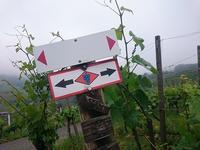 ハイキング旅行(2)いちめんのブドウ畑 - ドイツの陽だまり