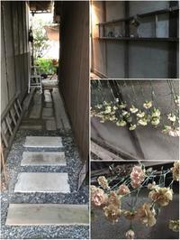 納屋Cafe自慢の路地が・・・「ドライフラワーの聖地に!?」編 - 納屋Cafe 岡山
