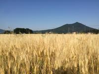 大麦畑と筑波山と夕陽と鴨 - 陶芸ブログ 限 無 窯    氷裂貫入青瓷の世界