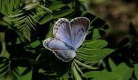 2018信州遠征その2 - 紀州里山の蝶たち